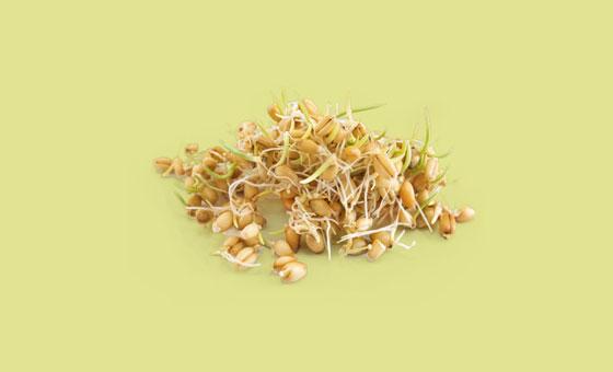 wheat germ